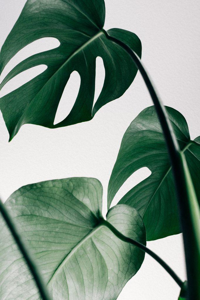 close-up, decoration, leaves